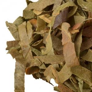 Loquat leaf chinese herb